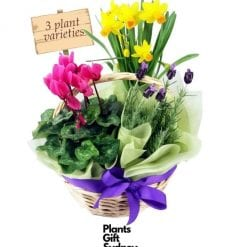 Son of Basket of Flowering Plants is the mini-me version of our full-size basket.