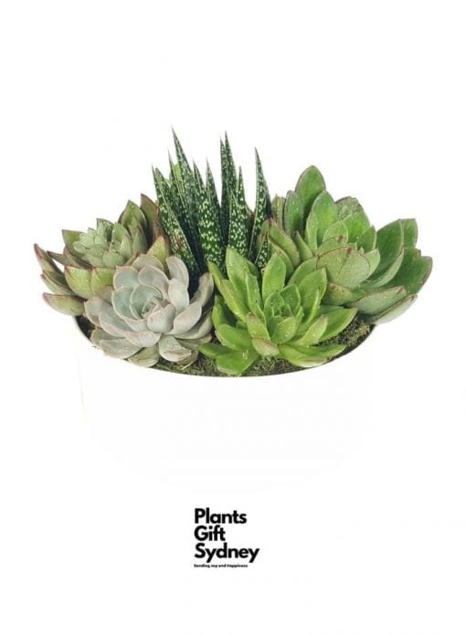 The Succulent Garden is a beautiful plant gift presented