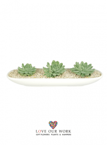 Long-and-Low-Succulent-garden-