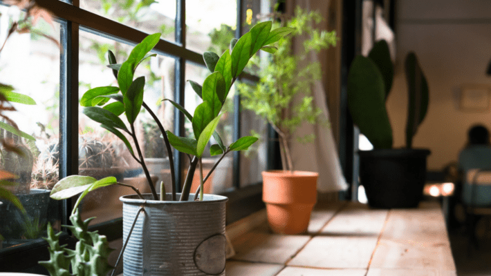 Plant Gifts Sydney Work Space pic cover